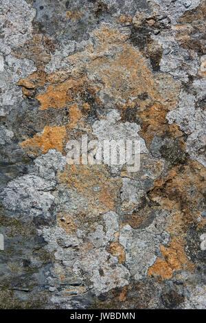 Ardoise couverts de lichen rock dans une carrière d'ardoise dans le Nord du Pays de Galles. Le lichen est de diverses Banque D'Images