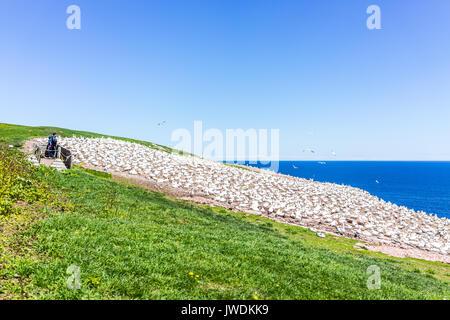 Percé, Canada - le 6 juin 2017: regarder les gens de Bassan colonie nichant sur falaise des oiseaux sur l'île Bonaventure Banque D'Images