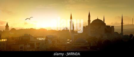 Mouette sur Sainte-sophie à Istanbul, Turquie, au lever du soleil Banque D'Images