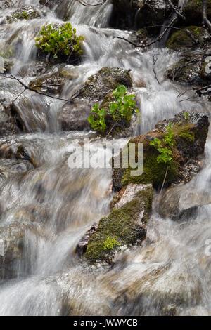 Les petites plantes qui poussent sur les roches exposées dans une petite cascade le long de la Teton Teton Crest Banque D'Images