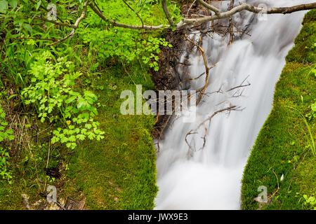 Un petit ruisseau dans le Canyon de granit pouring passé mousse et algues sur sa façon de Granite Creek dans le Banque D'Images