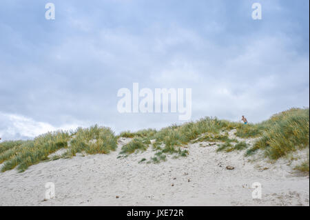 Dunes de sable dans Blavand, Danemark