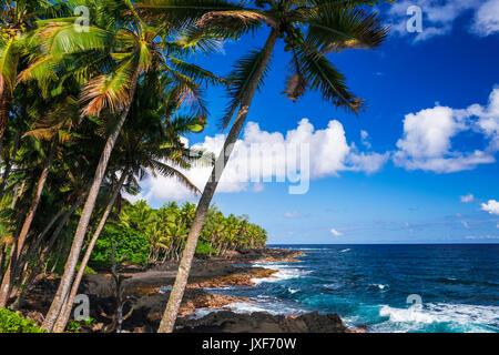 Surf et de palmiers le long de la côte de la Puna, la Grande Île, New York USA Banque D'Images