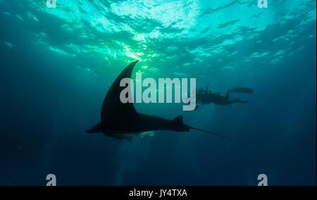 Manta Ray et plongeur en fin d'après-midi, Îles Revillagigedo, au Mexique. Banque D'Images