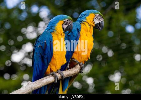 Parrot Banque D'Images