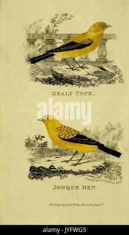 Un traité pratique sur la chanson les oiseaux (6851889481)