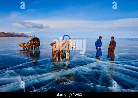 La Mongolie, province de Khövsgöl, traîneau à cheval sur le lac gelé de Khövsgöl en hiver