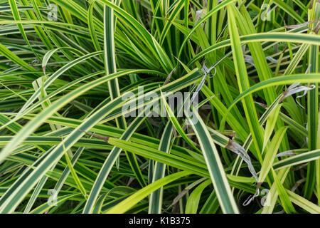 Les plantes tropicales qui grandissent dans la zone tropicale