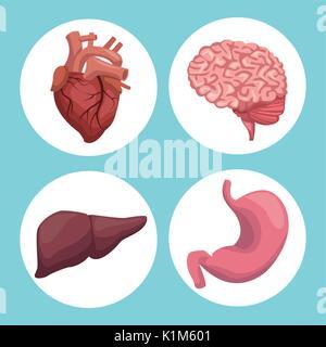 Fond de couleur avec des organes du châssis circulaire corps humain Banque D'Images
