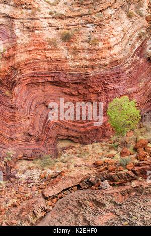 Les strates de roches plissées à Hamersley Gorge, parc national de Karijini, Pilbarra, dans l'ouest de l'Australie, Banque D'Images