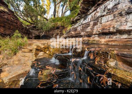 Gorge Kalamina, parc national de Karijini, Pilbarra, dans l'ouest de l'Australie, décembre 2015. Banque D'Images