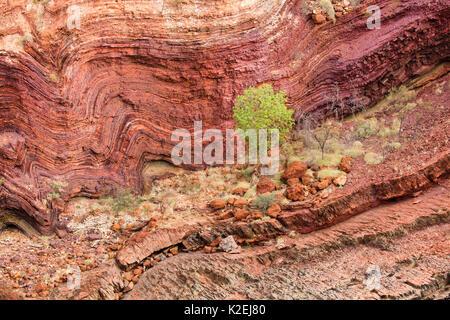 Hamersley Gorge, parc national de Karijini, Pilbarra, dans l'ouest de l'Australie, décembre 2015. Banque D'Images
