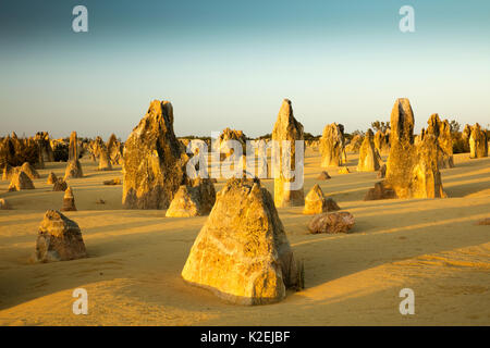 Les Pinnacles, formations calcaires. Le Parc National de Nambung, près de Cervantes, l'ouest de l'Australie, novembre Banque D'Images