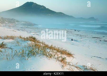 Les cormorans (Phalacrocorax sp) et de goélands sur Platboom Beach et le Cap de Bonne Espérance, Le Cap, Afrique Banque D'Images