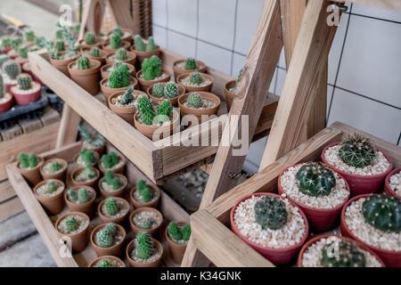 Plusieurs espèces de cactus en pots pour la vente dans une boîte de bois sur bois etagère en boutique jardin avec Banque D'Images