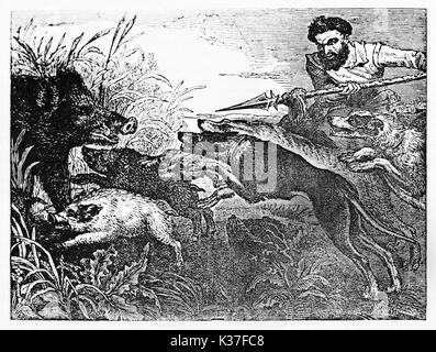 Hunter médiévale tenant une lance et ses chiens contre un sanglier se cacher dans un buisson avec ses chiots. Vieille Banque D'Images