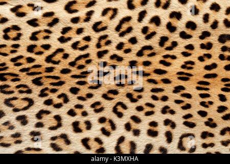 Vue rapprochée de la peau de léopard (Panthera pardus) Banque D'Images