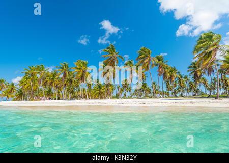 Canto de la Playa, l'île de Saona, à l'Est Parc National (Parque Nacional del Este), la République dominicaine, la mer des Caraïbes.