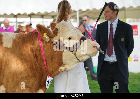 Les Bucks Country Show Banque D'Images