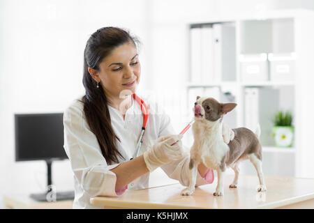 Donner de l'EFP chien vaccination Banque D'Images