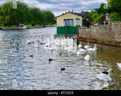 Les cygnes se rassemblent par la croisière sur le fleuve le bureau de vente des billets. Avon, Stratford upon Avon, Banque D'Images