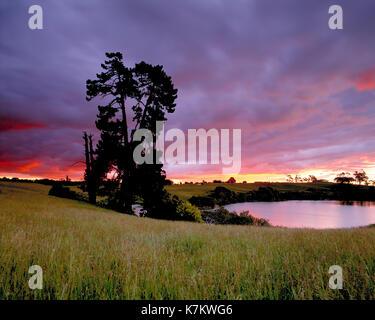 La Nouvelle-Zélande. île du nord Auckland region rurale.. coucher du soleil. Banque D'Images