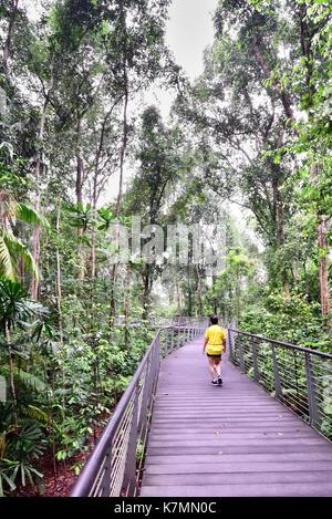 Les jardins botaniques de Singapour. un homme prend une marche matinale sur le sph à pied de broadwalk géants qui Banque D'Images