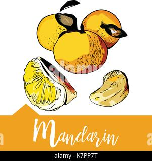 Vector illustration de mandarin dans la main Banque D'Images