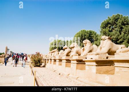 Avenue de sphinx à Louxor, Egypte Banque D'Images