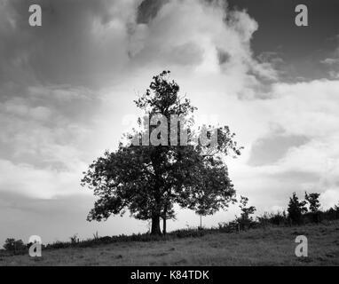 Seul arbre contre un fond de ciel orageux en monochrome Banque D'Images
