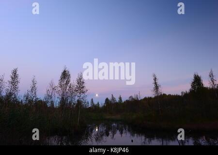 Lune d'automne dans le ciel au-dessus de la forêt swamp Banque D'Images