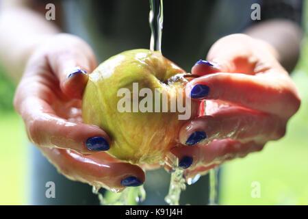 L'été dans le verger, la femme ishes l'apple sous le robinet. Banque D'Images