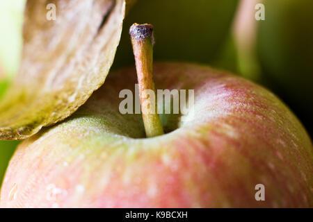 Une pomme verte dans les gouttes d'eau. La prise de vue macro. focus sélectif. Banque D'Images