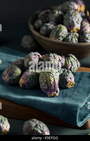 Matières vertes et violettes prêt à cuire les choux de bruxelles Banque D'Images