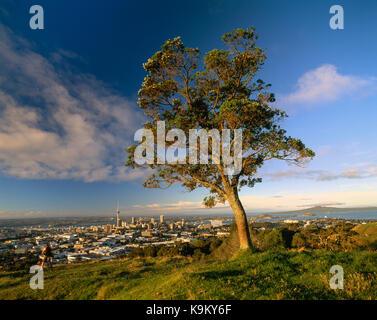 La Nouvelle-Zélande. auckland. Vue de haut de la ville sur le mont Eden avec l'arbre. Banque D'Images