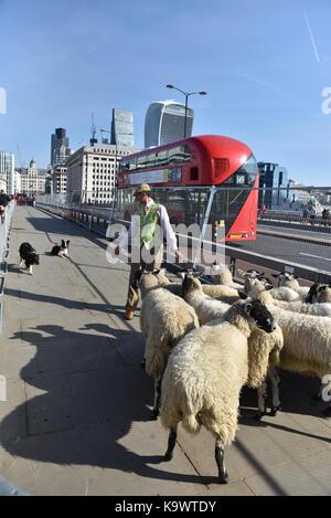 London Bridge, London, UK. 24 septembre 2017. l'assemblée annuelle d'entraînement des moutons à travers le pont Banque D'Images