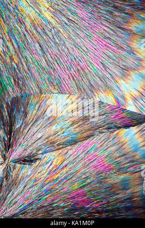 Cinchonidine microslide fondre, c'est un alcaloïde Cinchonidine Cinchona officinalis et dans Gongronema latifolium, microphotographie à polarisation croisée.