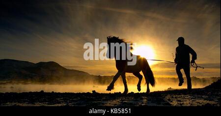 Entraîneur de chevaux avec cheval islandais, Islande