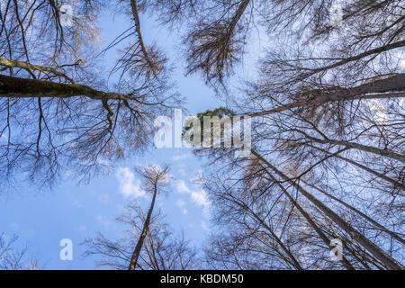 Vue sur la forêt d'arbres à divers bare tree tops et à un arbre vert printemps à haut Banque D'Images
