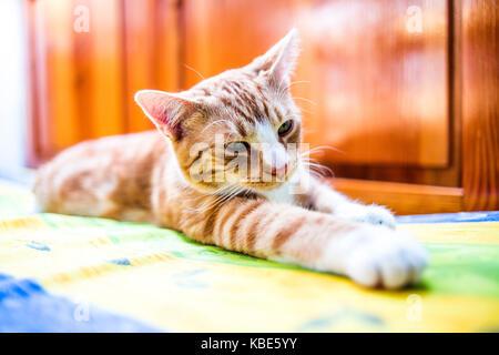 Un jeune chat couché dans un drôle de poser sur la table. Banque D'Images