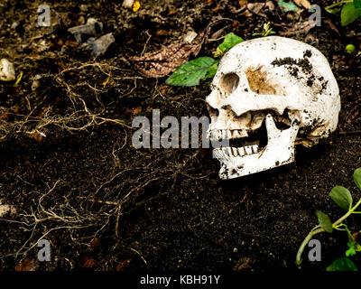 À côté du crâne humain enfouis dans le sol.le crâne a la saleté attaché à la notion de la mort crâne.et à l'halloween Banque D'Images