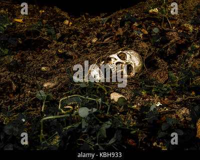 À côté du crâne humain enterré dans le sol avec les racines de l'arbre sur le côté. le crâne a la saleté attaché Banque D'Images