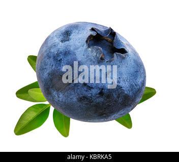 Les bleuets myrtilles fraîches, isolé sur fond blanc Banque D'Images