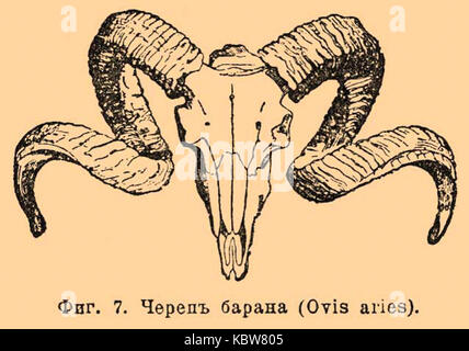 Dictionnaire encyclopédique Brockhaus et Efron b52 8792
