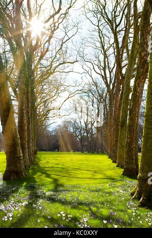 La lumière du soleil dans le vert de la forêt, le printemps! Banque D'Images