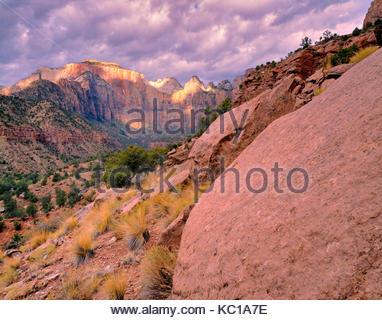 Le Temple de l'Ouest et les tours de la Vierge, Zion Canyon, Zion National Park, Utah Banque D'Images