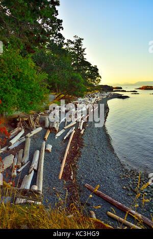 Une rive avec des tas de bois flotté à Pipers Lagoon Park, à Nanaimo, île de Vancouver, Colombie-Britannique, Canada. Banque D'Images