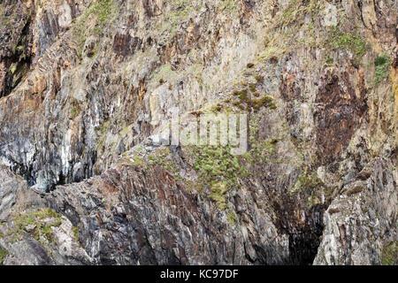 Pwllcrochan Bay sur sentier côtier du Pembrokeshire, Pays de Galles, Royaume-Uni. Falaises et rochers Banque D'Images