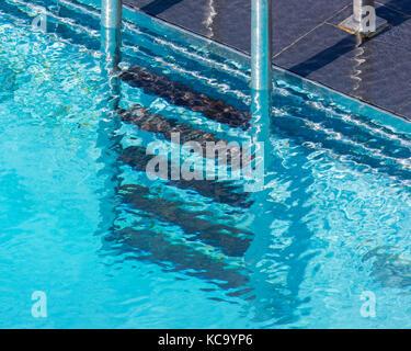 Une piscine extérieure bain Banque D'Images