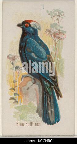 Bouvreuil bleu, du chant des oiseaux de la série mondiale (N23) pour Allen & Ginter Cigarettes, 1890 Banque D'Images